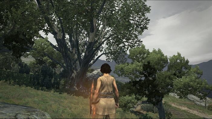 Dragon`s Dogma No Hud