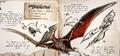 Pteranodon wyvernus