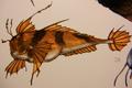 Shagfish (Estrichthys hirsutus)