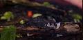 Peruvian Swamp Slug Troop