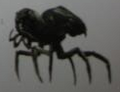 Pitchbug (Piceuscutum)