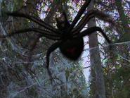 Ice Spider 4