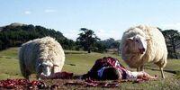 Mutant Sheep