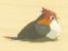 Sand Sparrow