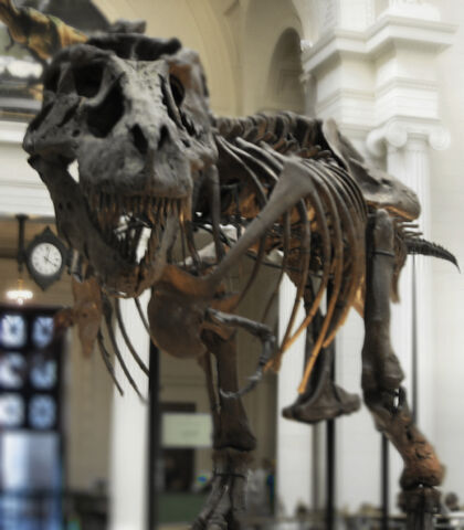 Plik:FieldMuseum1 Chicago.jpg