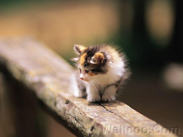 File:Kitten in garden kitten MIL56060.jpg