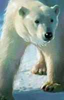 Animal bear polar