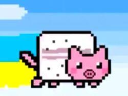 Nyan piggy