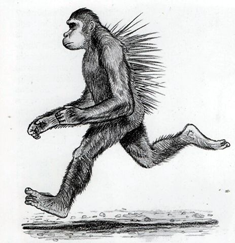 File:Chimp.jpg
