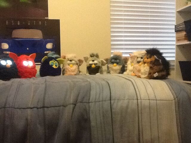 File:Furby collection.jpg