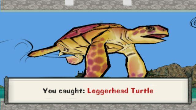 File:Loggerhead Turtle.jpg