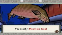 Mountain Trout