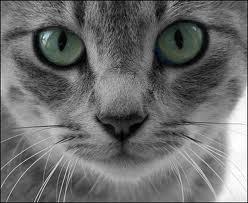 File:OMG CATS.jpg
