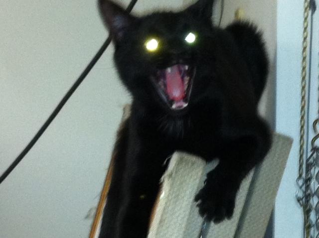 File:Dobby yawn.jpg