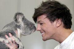 Louis of One Direction meets a koala bear-801762