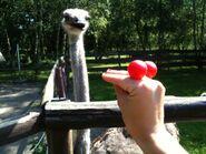 Oobi Kako Grampu Grandpoo Show - Eyes Hand Puppet Blog