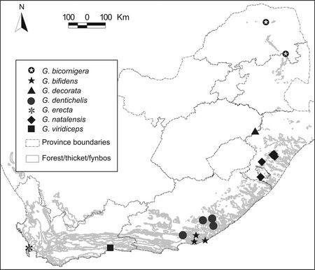 Distribution of Graemontia by Kury 2006