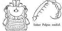 Padangcola jacobsoni
