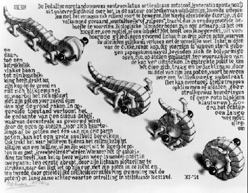 File:Escher, Curl-up.jpg