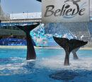 Orca Pod Wiki