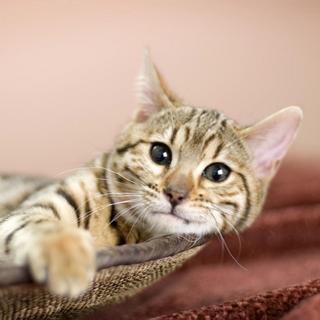 Datei:Cat.png