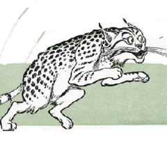 Wildcat chases Queen of the Field Mice.