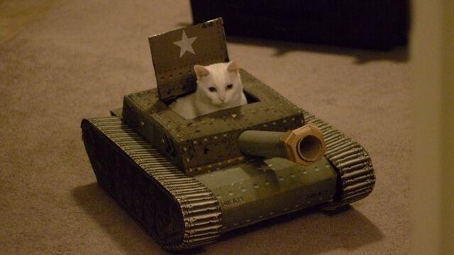 File:Cat Tank 01.jpg