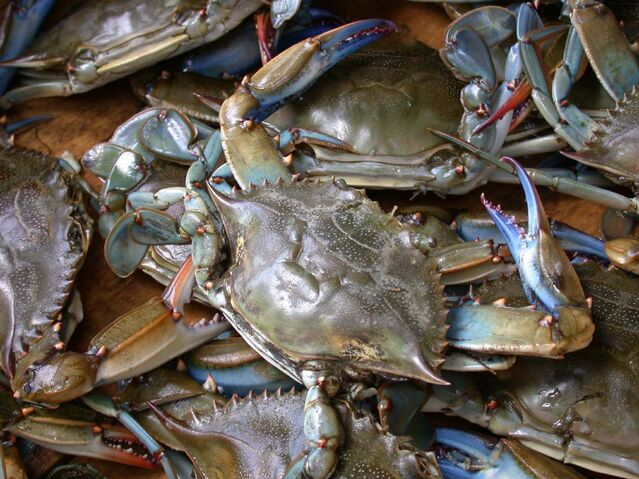File:Blue crab on market in Piraeus - Callinectes sapidus Rathbun 20020819-317.jpg