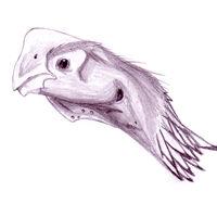 Oviraptor philoceratops profile1
