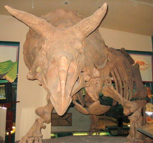 File:Triceratops 1.jpg