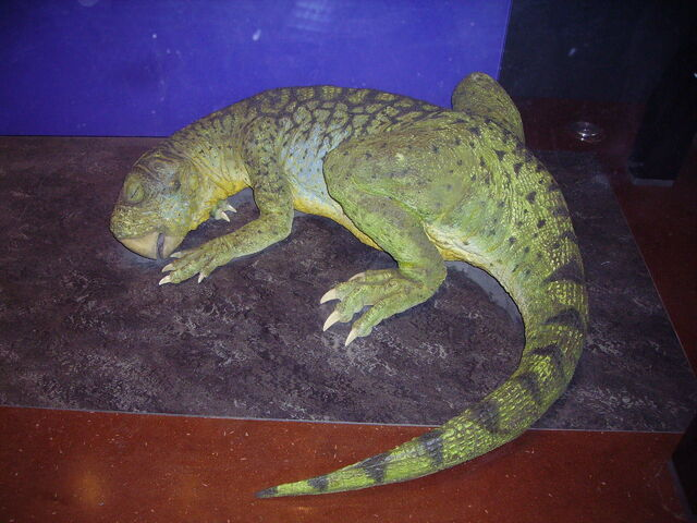 File:Psittacosaurus NHM.JPG