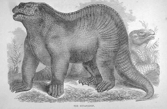 File:Goodrich Iguanodon.jpg
