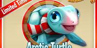 Arctic Turtle