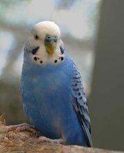 Bird 2171
