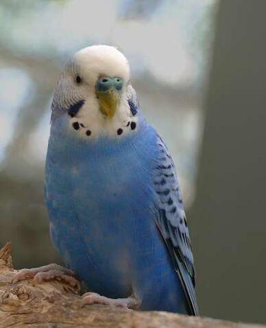 File:Bird 2171.jpg