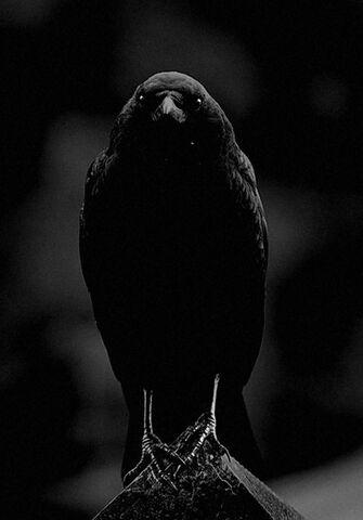 File:Dahlia - Cecilia's Raven.jpg