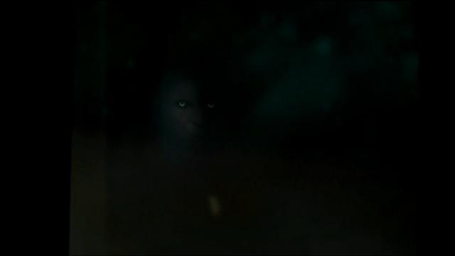 File:Wererwolf 2.png