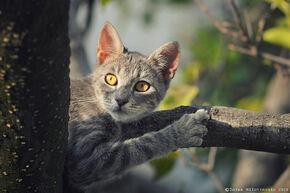 Hunter on a mission by zoranphoto-d6x1j6p