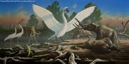 Cygnus falconeri