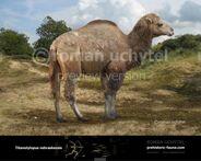 Titanotylopus-nebraskensis-2015-738x591