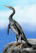 Copepteryx