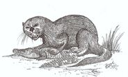 Enhydriodon the monster otter by hodarinundu-d3cn9jo