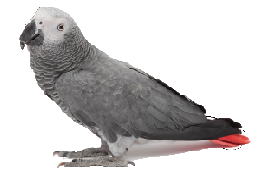 File:652Parrot.png