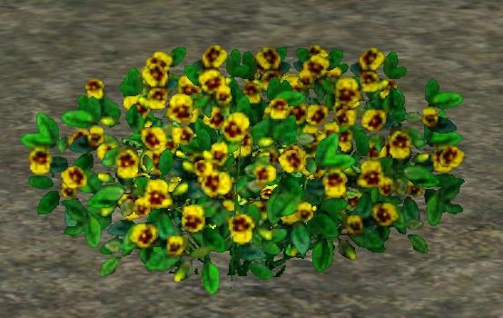 File:PerennialPansies.jpg