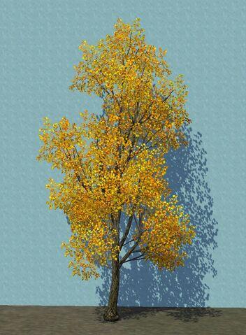 File:YellowCottonwood.jpg