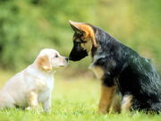 Cute-dog-wallpapers-background