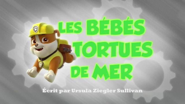 File:PAW Patrol La Pat' Patrouille Les Bébés tortues de mer.png