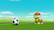 Pups Soccer 50