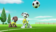 Pups Soccer 49