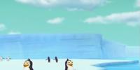 The South Pole/Appearances